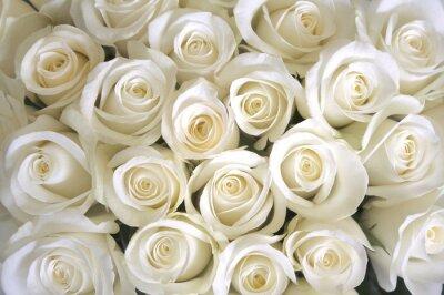 Fototapeta Bílé růže pozadí