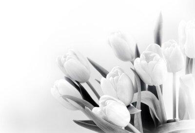 Fototapeta Bílé tulipány na bílém pozadí bw