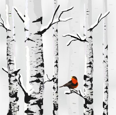 Fototapeta Birch ve sněhu, zimní karta v vektoru
