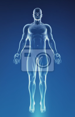 Fototapeta Blue Human Anatomy Body
