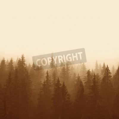 Fototapeta borový les v horách s mlhou