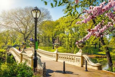 Fototapeta Bow bridge v Central parku na jarní slunečný den, New York City