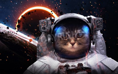 Fototapeta Brave cat astronaut at the spacewalk. This image elements furnished by NASA