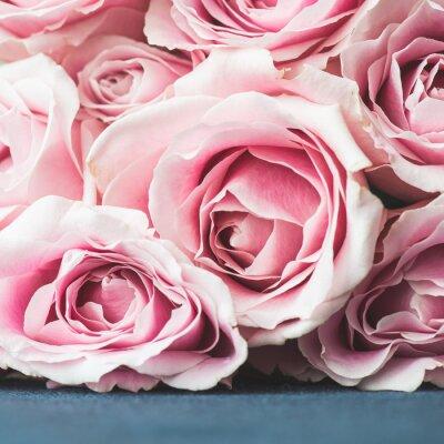 Fototapeta Bright růžové růže pozadí