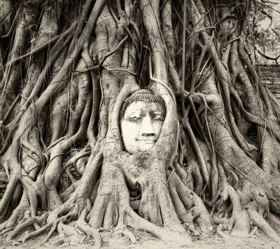 Fototapeta Buddha hlavou v kořeny stromů ve Wat Mahathat, Ayutthaya, Thajsko