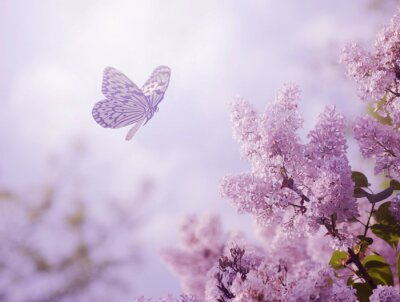 Fototapeta Butterfly a květiny