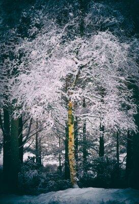Fototapeta Cairngorms Skotská oblast Highlands