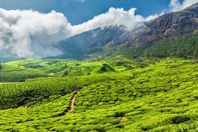 Fototapeta Čajové plantáže v Indii