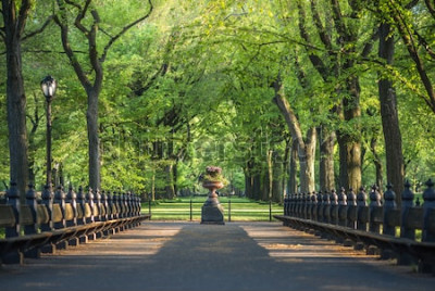 Fototapeta Centrální park. Obrázek oblasti Mall v Central Parku, New York, USA
