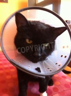 černá kočička zblízkakočička obrázek s