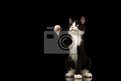 obrázky černé ženy kočička