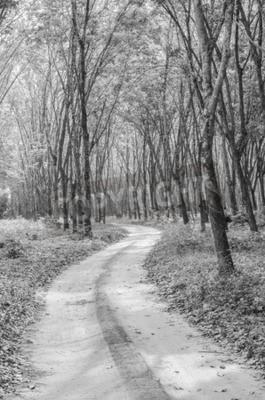 Fototapeta Černé a bílé cesty do lesa