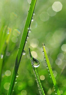 Fototapeta Čerstvé zelené trávy s kapkami rosy detailní. Příroda na pozadí