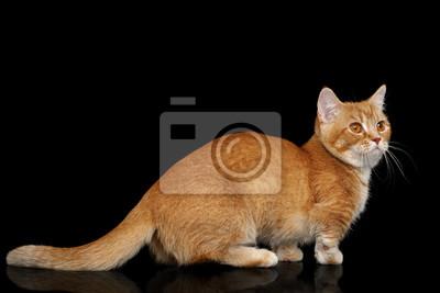 černé kořist kočička obrázky
