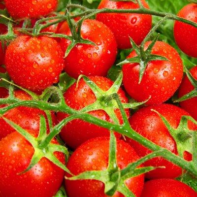 Fototapeta červená rajčata