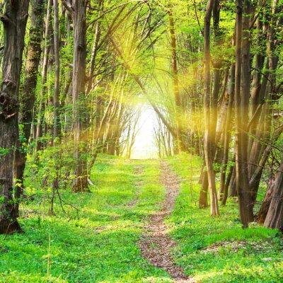 Fototapeta Cesta v krásném zeleném parku