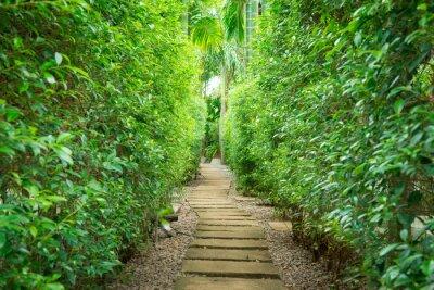 Fototapeta Cesta v zahradě
