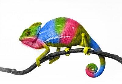Fototapeta chameleon - barvy