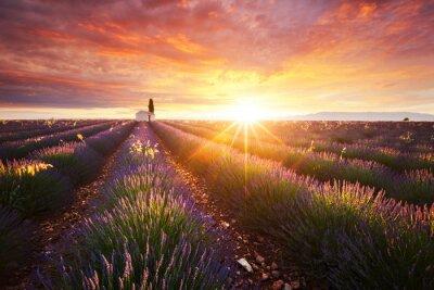 Fototapeta Champ de Lavande en Provence, Francie