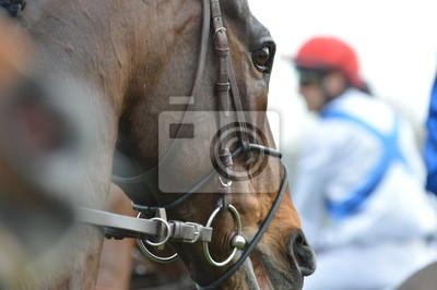 Fototapeta cheval de kurz