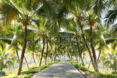 Fototapeta Chodník s kokosová palma v zahradě