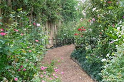 Fototapeta Chodník v botanické růžové zahradě, stock photo