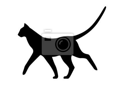 bílé kohouty a černá kočička