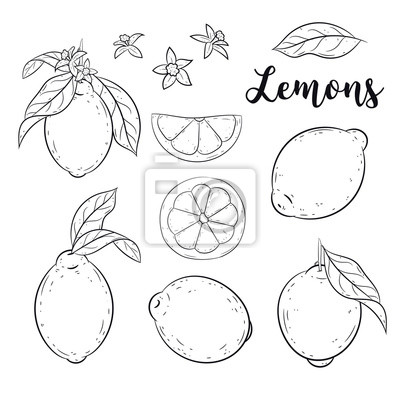Citrony Set Roztomily Vektorove Ilustrace Kresleny Styl Vetve