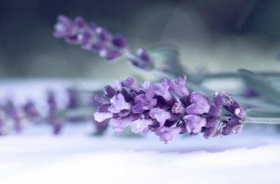 Fototapeta Cloce up levandulového květu