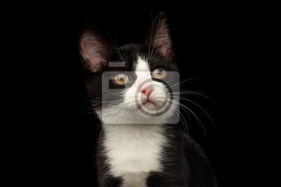 černá kočička ukazujekdyž je péro příliš velké