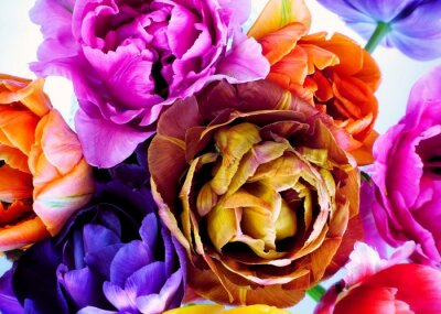 Fototapeta Colorful tulips in vintage style