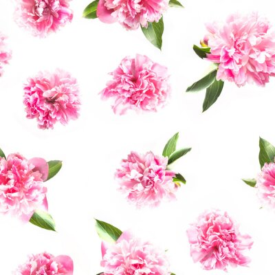 Fototapeta Creative seamless pattern of pink peony flower on white. Minimal flat lay. Top view.