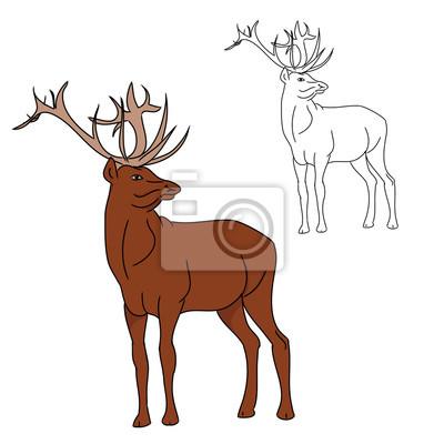 Deer (barvy a kontury image) 0 fototapeta • fototapety krásná a041d977c9