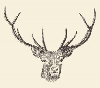 Fototapeta Deer Head Vintage ilustrace, Hand Drawn, Vector