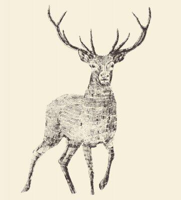 Fototapeta Deer Rytina, Vintage ilustrace, Vector