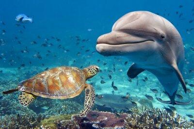 Fototapeta delfín a želva pod vodou na útesu