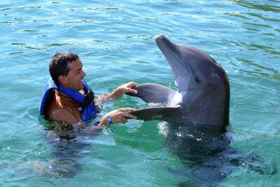 Fototapeta delfín plavat s vámi
