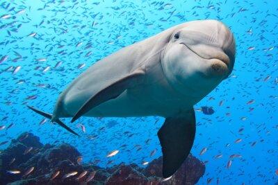 Fototapeta delfín podvodní útes na pozadí