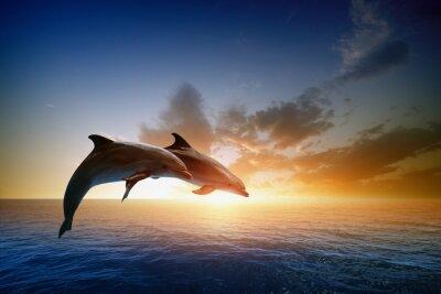 Fototapeta Delfíni na lyžích