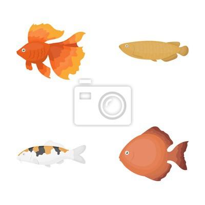 Disk Zlaty Kapr Koi Scleropages Fotmosus Fish Sada Ikon