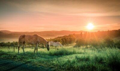 Fototapeta Divocí koně a tuscan svítání