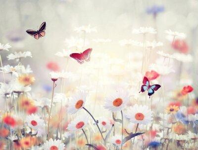 Fototapeta divoké květiny na louce