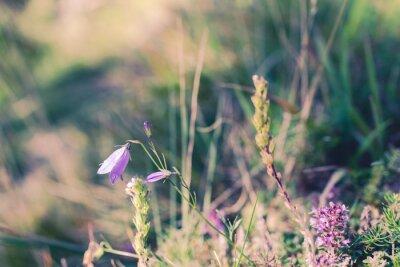 Fototapeta divokých květin