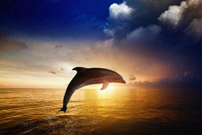 Fototapeta Dolphin jumping