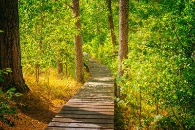 Fototapeta Dřevěná cesta v lese