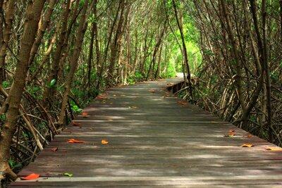 Fototapeta dřevěný most v lese