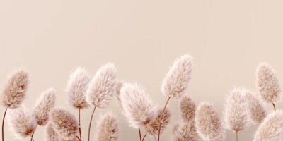 Fototapeta Dry fluffy flowers beige pastel color boho background 3d rendering. Abstract Pampas grass isolated - calm floral wallpaper.