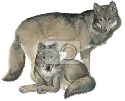 Dva Sedivi Vlci Na Bilem Pozadi Ilustrace Kresleni Na Pocitaci