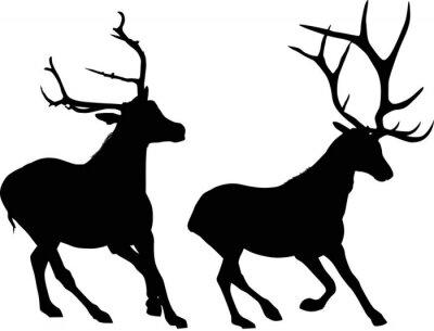 Fototapeta Dva vedoucí černé jeleni na bílém