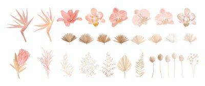 Fototapeta Elegant dry protea flower, tropic palm, pale orchid, eucalyptus, dried tropical leaves, floral elements